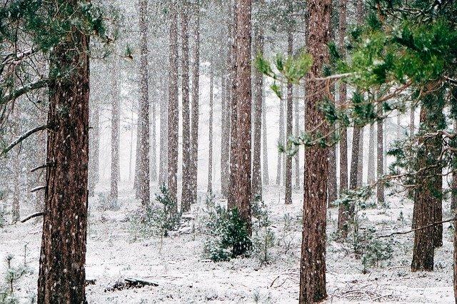 Tema: vinterferie – sjove lege, aktiviteter og opskrifter