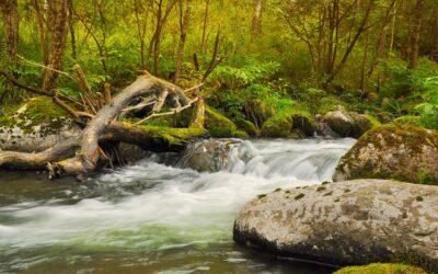 Leg: Kryds floden